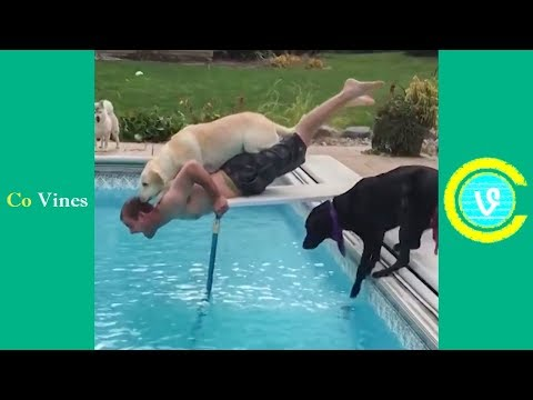 Try Not To Laugh Watching Funny Animal Fails Compilation November 2018 #1 - Co Vines✔