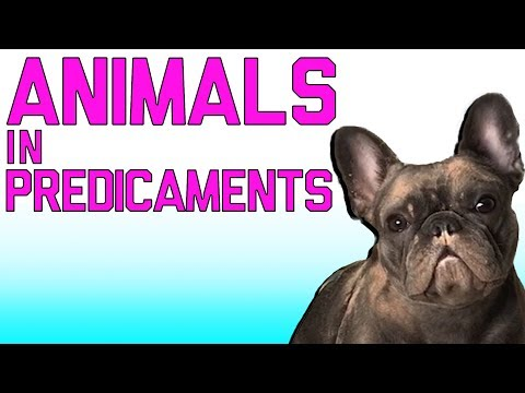 Animals In Predicaments: Funny Animal Fails (March 2018) | FailArmy