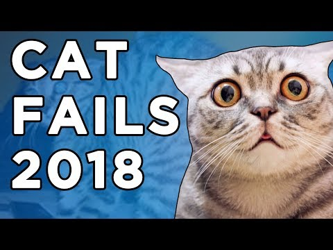 Hilarious Cats Videos 2018 | Funny Fails Compilation