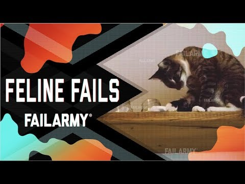 Feline Fails: Cat Got Your Tongue? (July 2018) | FailArmy