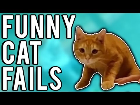 Funny Cat Fails June 2017 | A Fail Compilation by FailUnited