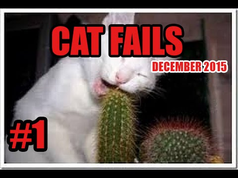 FUNNY CAT VINES GONE WRONG COMPILATION 2016 - CAT FAILS COMPILATION #1