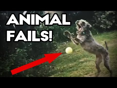 PET AND ANIMAL FAILS of September 2017 | Funny Best Fail Compilation