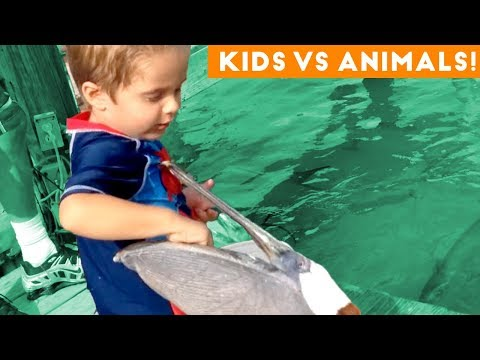The Funniest Pets Vs Kids & Babies Fail Compilation | Funny Pet Videos