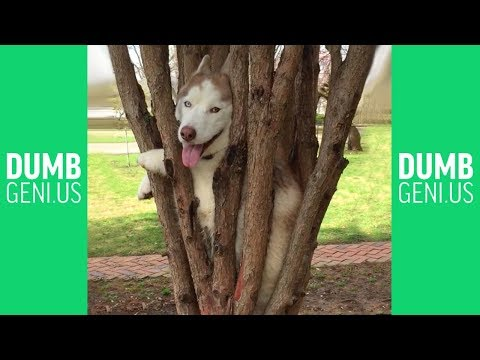 Funny Vines Animal Fails Compilation | Best Pet Fail Dumb Genius 2017