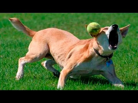 Dog Fails - Dog Fails Compilation 2016