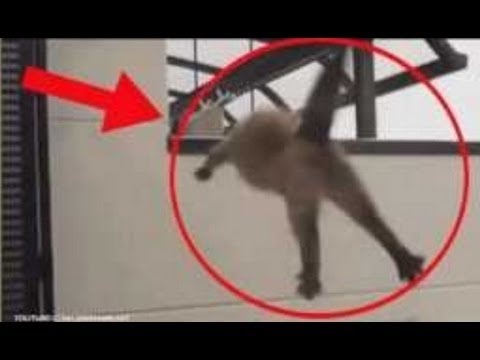 Funniest TOP 5 Cats Suicide / Cats Jump Fail Kitty Funny