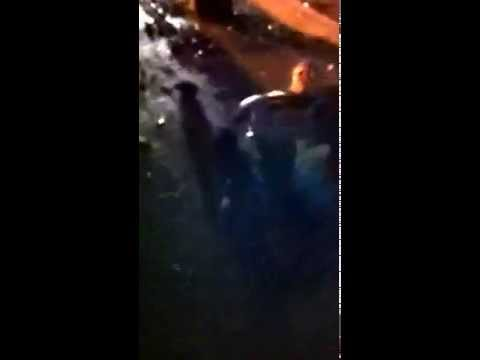 College drunk fight. Kid gets knocked out with one punch!
