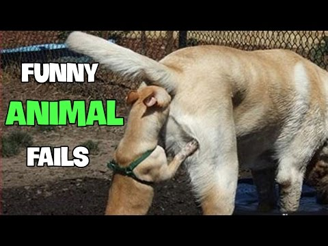 Funny Animal Fails 2016 || Best Fails Compilation By FailADD