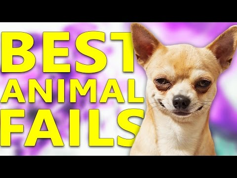 Best ANIMAL Fails Compilation #34 || July 2016 || FailFun