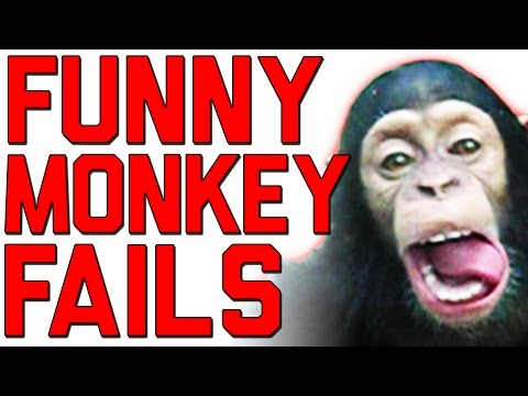 The Ultimate Funny Monkey Compilation || Monkey Fails by FailArmy