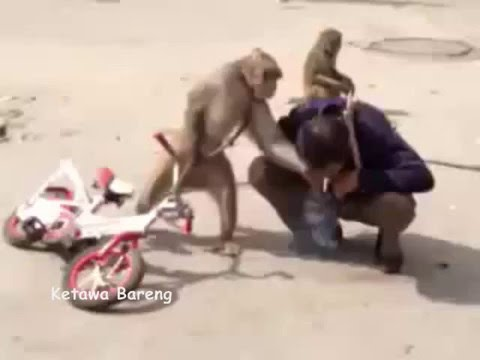 Funny Animal Fail / Hewan Jahil Lucu / Funny Animal Nosy Friends Videos