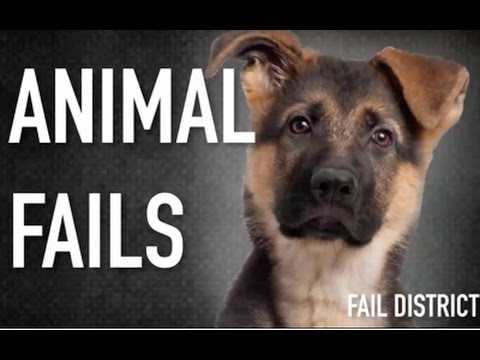 Funny Animal Fails 2014 | Animal Fail Compilation