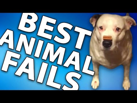 Ultimate ANIMAL Fails Compilation #83 || November 2016 || FailFun