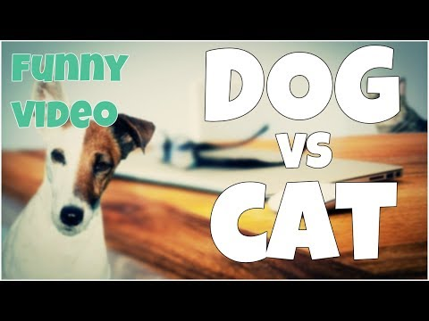 Dog vs Cat fail 🔸 7 second of happiness FUNNY Video 😂 #384