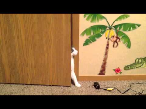 Stealth Cat Fail