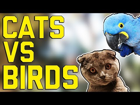 Cats vs. Birds: FailArmy Versus (October 2017) || FailArmy