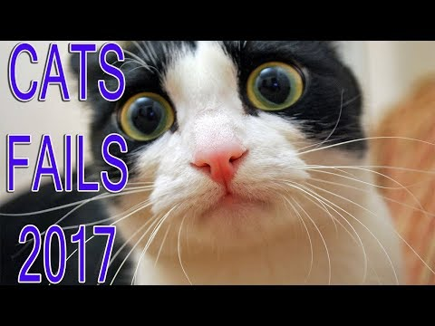 ABSOLUTE FAIL - CATS FAILS COMPILATION 2017