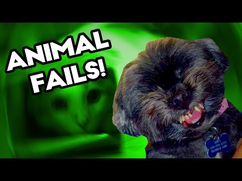 FUNNY ANIMAL AND PET FAILS!  July 2017 | Funny Weekly Fail Compilation | Best Fail Montage Selection