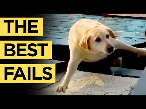 PETS HAVE NO CHILL! NEW Ultimate Cute & Funny Animal Fail Vines Compilation 2018 | The Best Fails