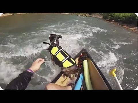 Epic Dog Fail | Leap Out of Canoe