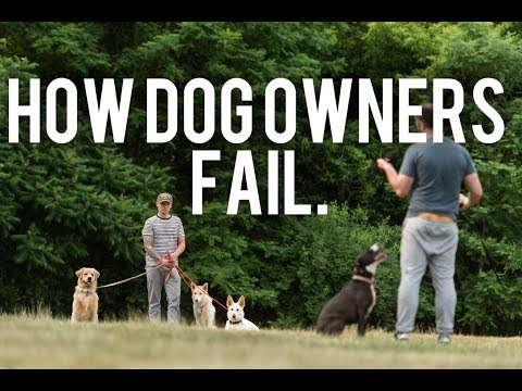 How great dog owners and trainers fail - Dog Training with Americas Canine Educator