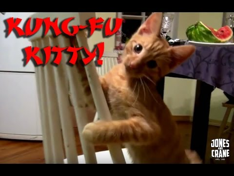 Kung-Fu Kitty FAIL!