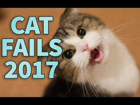 Funny Cat Fails Compilation 2017 | FailBros | Stupid Cats | Cats being Jerk | Cats vs Dog |