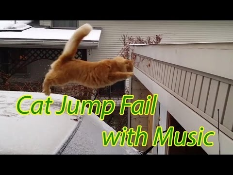 15 Funniest Cat Jump Fail with Music [Sail by AWOLNATION] | Hiu Hiu TV