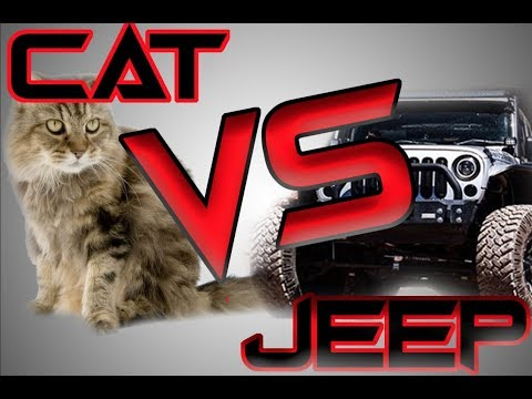 CAT VS JEEP (CAT FAIL CAUGHT ON TAPE)