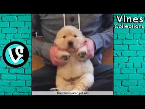 Ridiculousness Vines | Best Vine Compilation June 2016 | with TITLEs